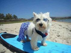 Going surfing! Got to practice my skills...!! By Stephen H. Foster
