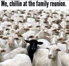 Kidding. I wouldn't go to a family reunion. Unless it's someone else's family. I'd go then.