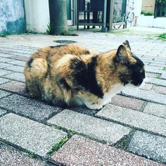 Tokyo Street View. #walking #tokyo #japan #201605 #shotoniphone6 #cat