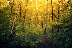 A walk in the forest by PawelMatys.deviantart.com on @deviantART