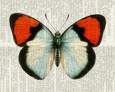 Butterfly - vintage red and white butterfly artwork printed on old dictionary page via Etsy