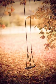 Pretty swing in fall...