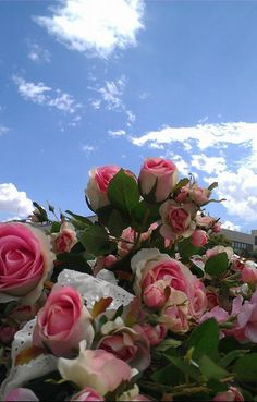 For a good day with beautiful roses at flower line