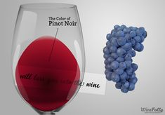 Amazing Pinot Noir Wine Facts | Wine Folly Pinot Noir Food Pairing, Pinot Noir Taste, Pinot Noir Grapes, Pinot Noir Wine, Wine Facts, Wine Folly, Wine Education, Red Wine Glasses, Expensive Wine