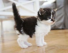 AHHHHHHH!! Im SO IN LOVE SOO SO IN LOVE I WANT YOU BABY KITTY YOUR MINE COME HERE