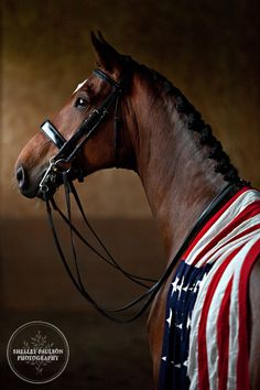 Beautifl horse with American flag. Jim Koford and Rhett – A US Dressage Dream Team Working to represent the USA in the 2012 Olympics. Rhett proudly wears the American Flag Crazy Horse, My Horse, Horse Love, Horse Art, All The Pretty Horses, Beautiful Horses, Animals Beautiful, Cute Animals, Especie Animal