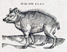 wild boar 1658, by Edward Topsell
