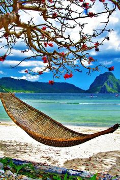 Just a hammock in a tropical paradise