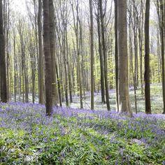 Promenade Dans Le Bois De Halle En Ce Dbut Daprsmidihellip