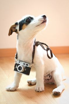 """""""Well, the lighting's pretty good here!"""" #dogs #pets #JackRussellTerriers Facebook.com/sodoggonefunny"""