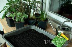 Teil 2 | Mizzis Küchenblock · Brunnenkresse im Aufzuchtgefäß