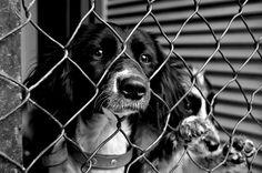 Vida de Cão: Portfólio Fotojornalismo - Faculdade de Ciências Sociais e Humanas / UNL