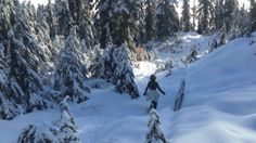 Grouse Mountain- looks too expensive to bother with it, esp. with kids in tow, but who knows?