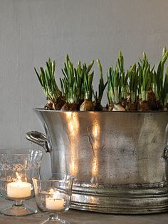 you can do this with paperwhites or red and white tulips and amaryllis are my favorites. Tuck in holiday greenery around base and it makes the most gorgeous holiday accent Christmas Greenery, Noel Christmas, White Christmas, Christmas Decorations, Xmas, Christmas Flowers, Easter Flowers, Christmas Bulbs, Champagne Buckets