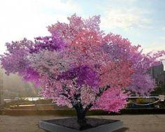 tree-of-40-fruit   www.superileri.com