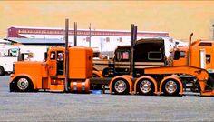 Orange pete