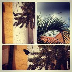 Photo by:Laura Alvarez butterflies