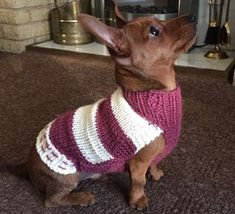 Made to order Dog Jumper, Dog Sweater, hand knitted in UK, with optional harness hole – Hand Knitting Knitted Dog Sweater Pattern, Knit Dog Sweater, Dog Sweaters, Dachshund, Waterproof Dog Coats, Jack Russell, Dog Jumpers, The Wooly, Dog Language