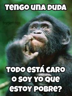 Muy pensativo chimpancé. Love Phrases, Primates, Animal Pictures, Humor, Funny, Animals, Funny Sassy Quotes, Pretty Quotes, Funny Memes