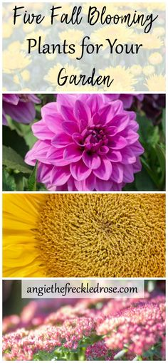 Gardening Vegetables Five Fall Blooming Plants for Your Garden Growing Flowers, Planting Flowers, Flowers Garden, Fall Flowers, Fall Planting, Flower Gardening, Rustic Flowers, Growing Plants, Vegetable Garden