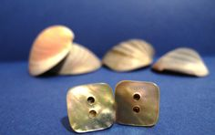 Natural colour shell button earrings
