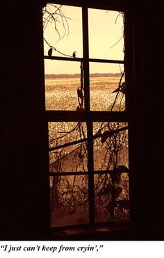 The Mississippi Delta:  Shack & Cotton Fields #2, Ron Rocz Photography