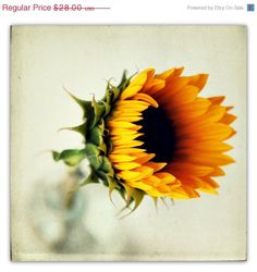 sunflower photograph fall decor autumn flower by SeptemberWren, $22.40