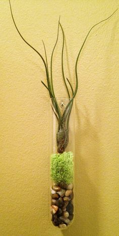 Modern Air Plant Wall Art by lovelyterrariums on Etsy, $17.00