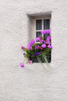 """""""Narrow window with Geranium flowers"""" by Jenny Rainbow - Balcony Plants, Balcony Garden, Flower Background Wallpaper, Flower Backgrounds, Geranium Flower, Window Box Flowers, Garden Windows, Beautiful Flowers Wallpapers, Window View"""