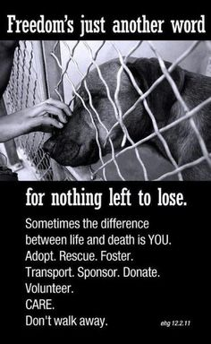 Adopt, foster, sponsor, transport, donate, volunteer. It may be the difference between life and death for a shelter dog.: