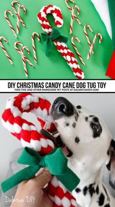 DIY Woven Fleece Christmas Candy Cane Dog Tug Toy DIY Woven Fleece Christmas Candy Cane Dog Tug Toy – Tap the pin for the most adorable pawtastic fur baby apparel! You'll love the dog clothes and cat clothes! Homemade Dog Toys, Diy Dog Toys, Cat Toys, Toy Diy, Diy Pour Chien, Dog Crafts, Dog Pin, Dog Items, Christmas Cats