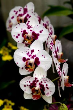 white-pink-orchid (534×800)