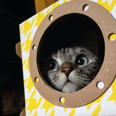 Cat Volunteers For NASA Space Mission
