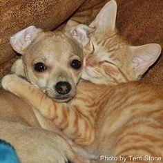 Funny Pet Videos animals funny-stuff