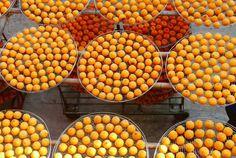 曬柿子(餅)—味衛佳柿餅觀光農場   攝影:葉珠珠