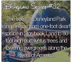 Disney Disney Wtf Facts, Disney World Facts, Disney Jokes, Disney World Vacation, Disney Vacations, Disney Trivia, Disney Worlds, Family Vacations, Cruise Vacation