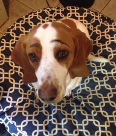 35 #Dogs With Eyebrows | PawNation