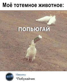 Funny Mems, Funny Jokes, Russian Jokes, Hello Memes, Anime Mems, Bad Humor, Fun Live, Mood Pics, Love Memes