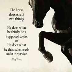 Een paard doet wat hij denkt dat je vraagt of hij doet wat hij denkt dat nodig is om te overleven.