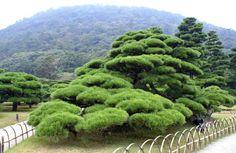 Miniaturowe drzewko niwaki