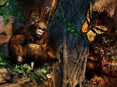 Jump into a lively jungle-themed setting and enjoy all-American fare for lunch or dinner at Rainforest Cafe at Disney Springs Marketplace.