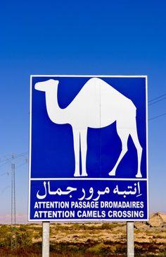 Sign For Camel Crossing In Sahara Desert Near Tozeur, Tunisia