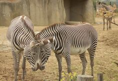 We had a great time in the Vincennes zoo garden - a nice alternative to visit Paris with children and NOT to go to Eurodisney