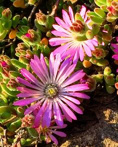 Santa Cruz CA: #wildflowers #beach #California #athens  #crete #gdansk #malaga  #tunis #kiev #vilnius #norwich #praha  #jerusalem #tehran #tokyo #marseilles  #lima #bestofsantacruz #panama #buenosaires #islamargarita  #toronto #santacruztoday #santacruzlife #santacruz  #capitola #sanjose  #santacruznow #visitsantacruz by slawekwojtowicz