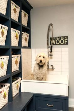 dog wash station dog wash station with widespread kitchen faucets laundry room transitional and lockers dog wash station with baskets laundry room transitional and chrome used dog wash station for sal