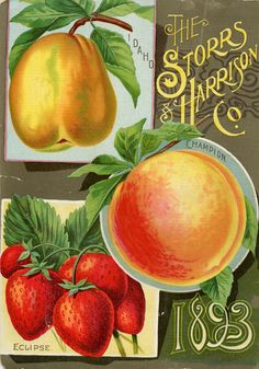 Seed Catalogs from Smithsonian Institution Libraries #diycrafts #ecrafty #seedcatalogs