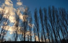 Sky Tree Sky, Mountains, Nature, Travel, Outdoor, Fotografia, Heaven, Outdoors, Naturaleza