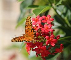 бабочка на яркие bloom♥