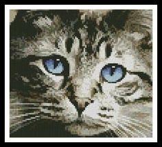 Mini Blue Eyes - X Squared