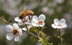 EU failing on flagship biodiversity goals